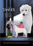 2011 – Tanner BIS # 8