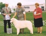 2003-Reserve_Winners_Dog.jpg