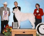 2008-Best_in_Specialty_Show.jpg