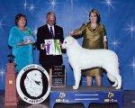 2010-RWD-Best_Puppy.jpg